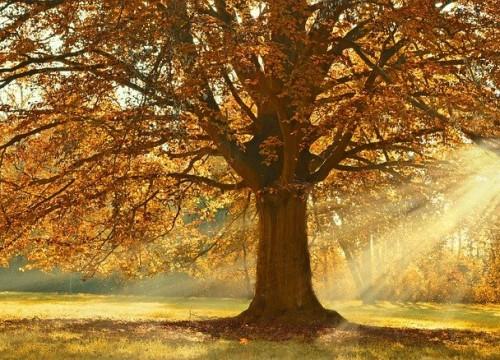 tree-4637270_640